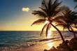 Palm tree on the tropical beach