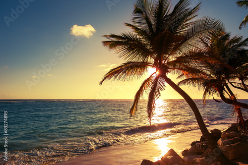 Papiers peints Jaune de seuffre Palm tree on the tropical beach