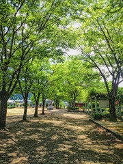 地面に木々の影が映る