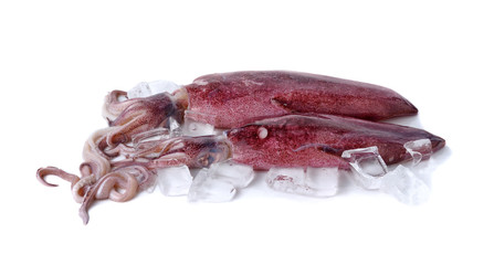 fresh whole round squid with ice cube on white background