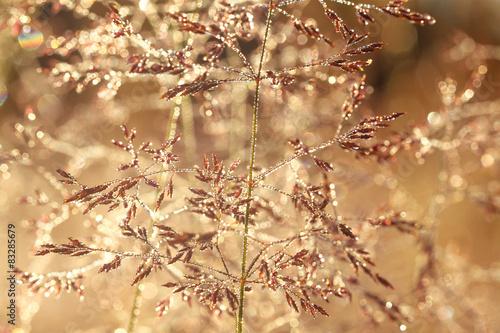 Keuken foto achterwand Paardebloemen en water blurred background on a summer meadow
