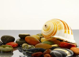 colored sea pebbles and seashell