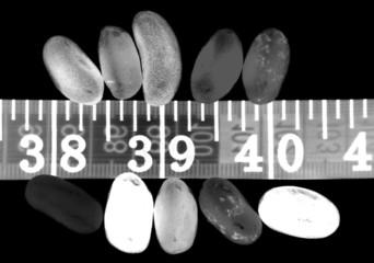 digital photogram of sweets making you fat