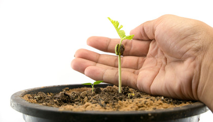sprouts, seedling, Saving seedling