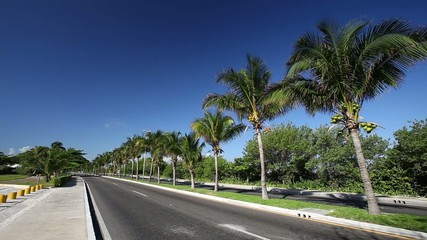 Caribbean street road with palm trees