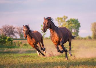 horse © ashva
