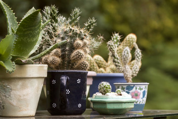 Cactus plants in different ceramic planters