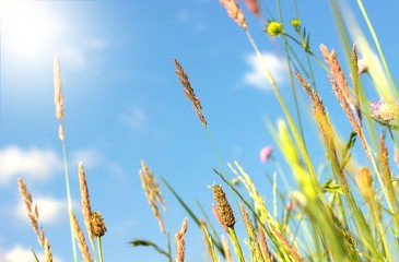 Frühlingsgräser im Sonnenlicht