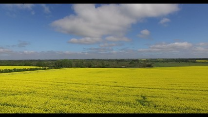 Rapeseed (Brassica napus) fields in aerial view
