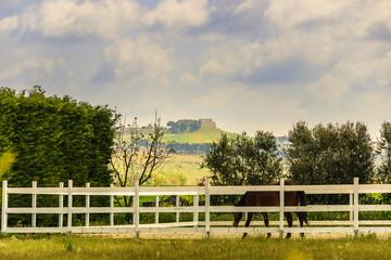 PRIMAVERA.Paesaggio agreste:fattoria con cavallo.ITALIA(Puglia)