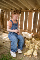 Child sits in hen coop with duck and ducklings.