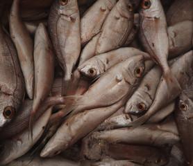Fresh raw fish in market