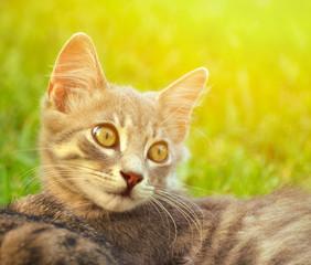 Cute kitten portrait outdoor