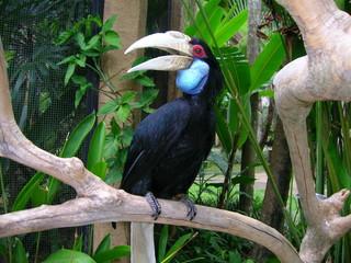 rare bird. Toucan
