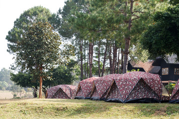 Dome tent camping at Thung Salang Luang National Park Phetchabun