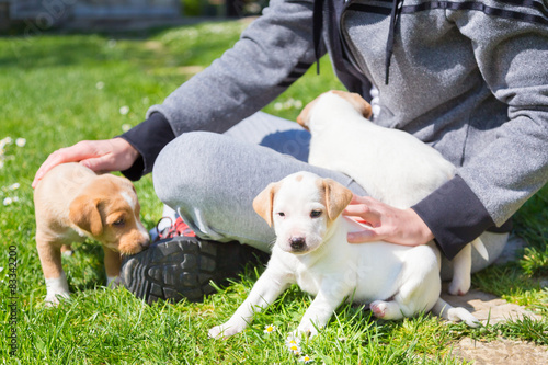 Papiers peints Hyène Mixed-breed cute little puppy in lap.
