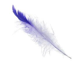 isolated white and blue straight feather