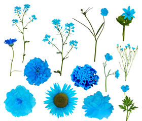thirteen light blue isolated flowers collection