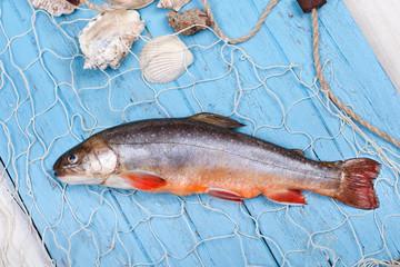 Saibling im Fischernetz