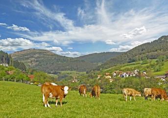sonniger Fruehlingstag im Schwarzwald