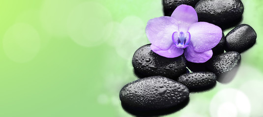 Spa concept. Flower violet orchid and  black stones.