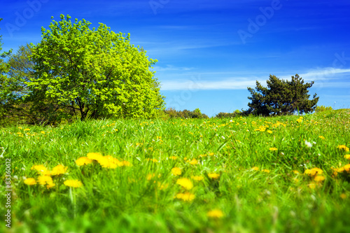 Spring countryside, meadow with green grass, trees and flowers.