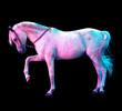 Obrazy na płótnie, fototapety, zdjęcia, fotoobrazy drukowane : caballo