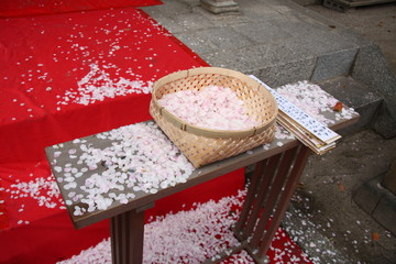 Sakura petals gathered for a ceremony in japanese shinto shrine