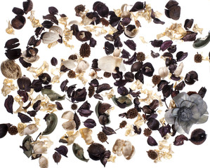 dried flowers on a white background- Stock image