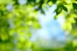 Grünes Paradies, unscharf, ideal als Hintergrund