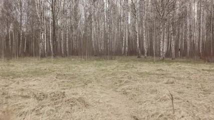 walking in birch forest from field in early spring, stabilized