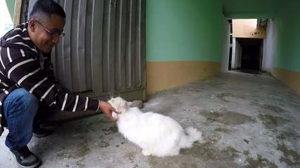 Mi gran Gato Persa
