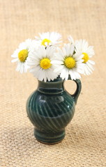 Composition of white daisies in glass vase