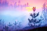 Beautiful nature sunrise foggy landscape. Misty forest