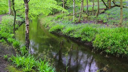 River in the forest with fresh green foliage, footage