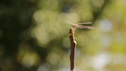Green dragonfly flies away and sits on the brown branch