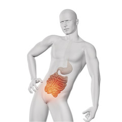 3D male medical figure with exposed guts