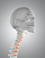 3D close up of male medical figure with throat skeleton
