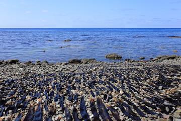Dried seaweed in Rebun island, Hokkaido, Japan