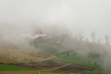 Vegetable farm covered with fog near Zunil