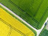 Luftbild - Ackerbau, Raps- und Getreidefelder mit Feldwegen,