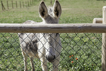 Fence donkey