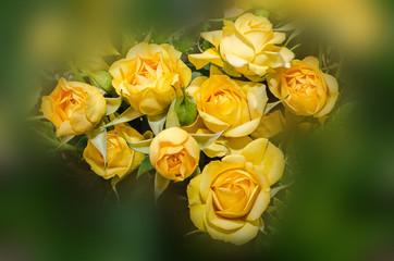 Yellow roses flowers, floral arrangement, bouquet, close up.