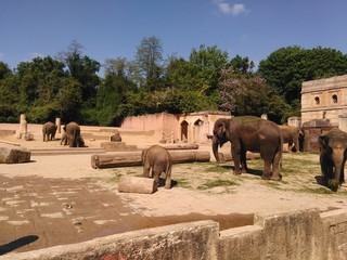 Elephants in temple like zoo