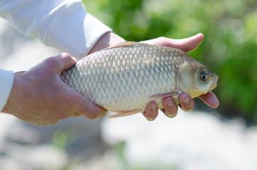 Fish in the hands of men