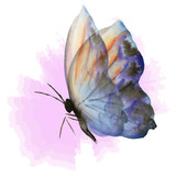 blue butterfly on pink