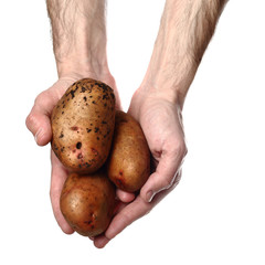Man`s hands holding potatoes isolated on white background