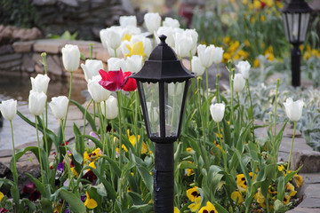 Bright tulips on a bed and a decorative street lantern