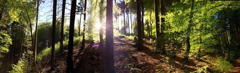 wald panorama mit Sonnenstrahlen in Frühjahr