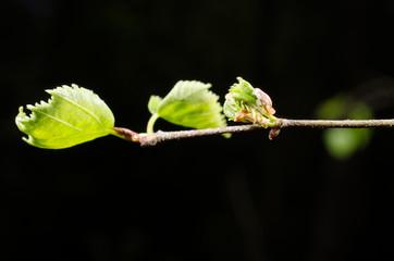 neue Blätter